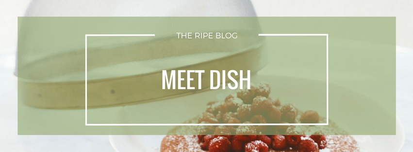 dish-blog-cover