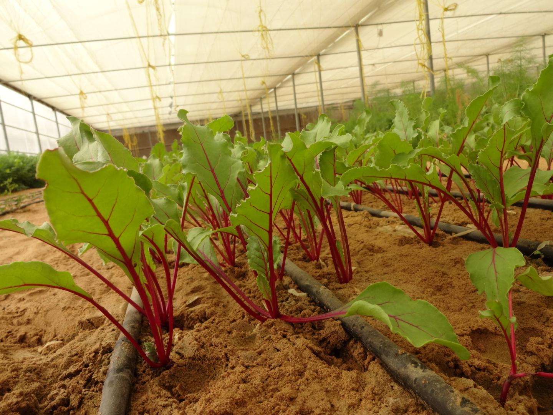 Ripe Organic farm