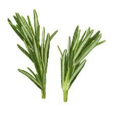 Ripe Organic Herb, Rosemary