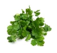Organic Herb, Coriander