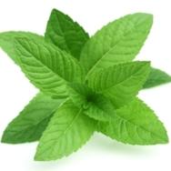 Organic Herb, Mint