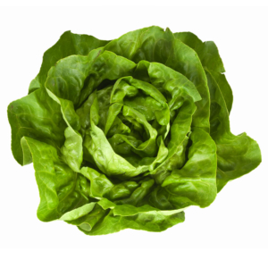 Ripe Organic Boston Lettuce