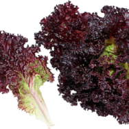 Lettuce, Lolo Red