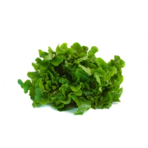 Ripe Organic Lettuce, Oak leaves