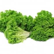 Lettuce, Lolo Green