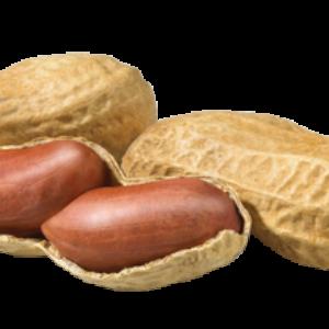 Ripe Organic Peanuts