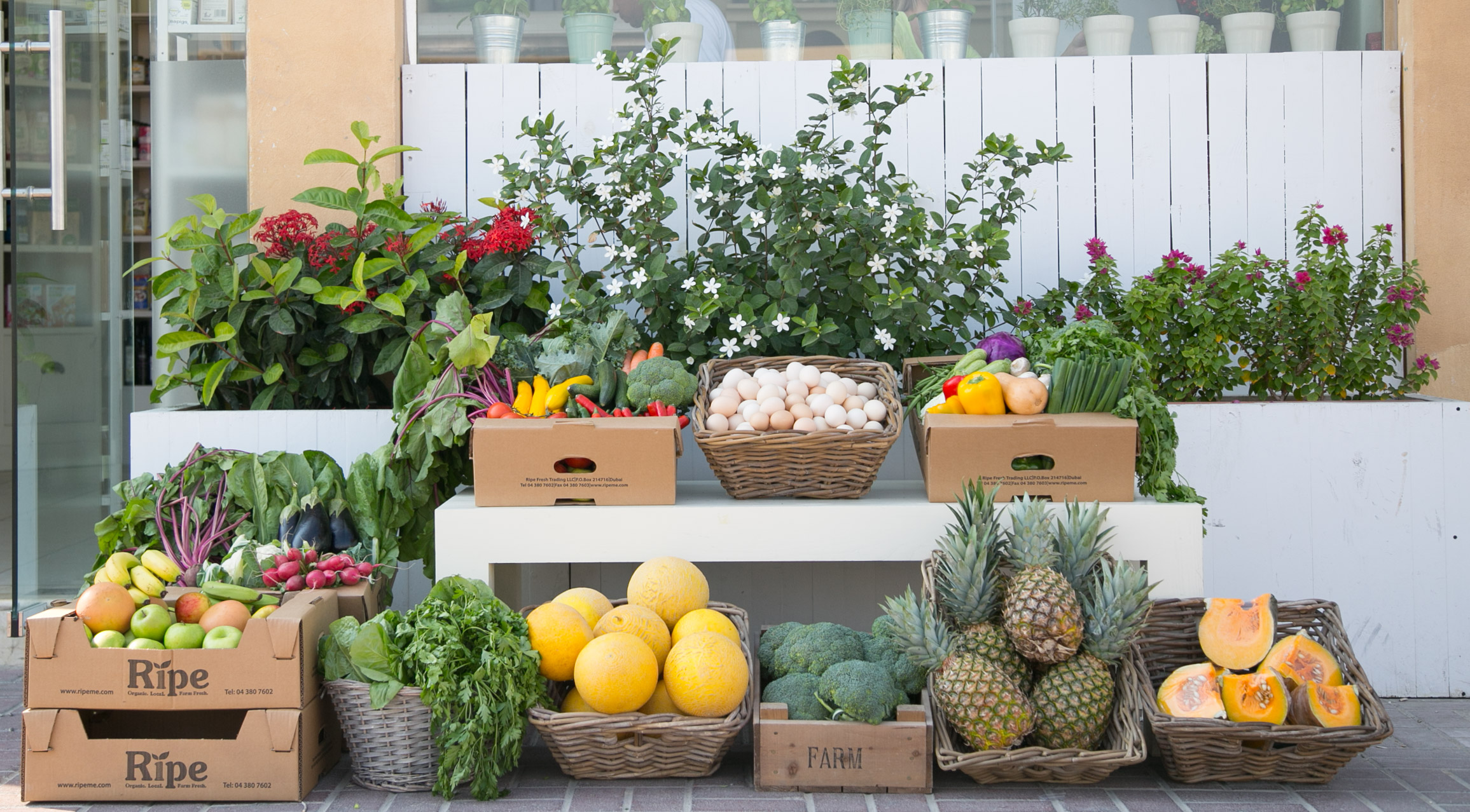 Organic Store Dubai | Farm Fresh Produce | Ripe Organic Shop