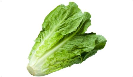 Ripe Organic Lettuce, Romaine