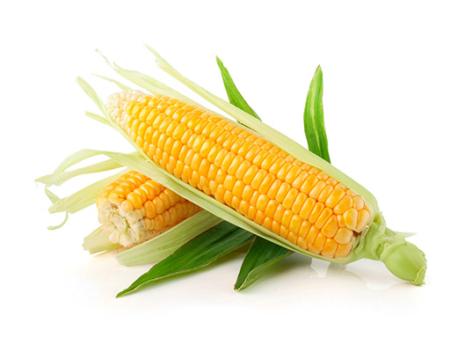 Ripe Organic Sweet Corn