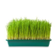 Wheatgrass Tray, Small